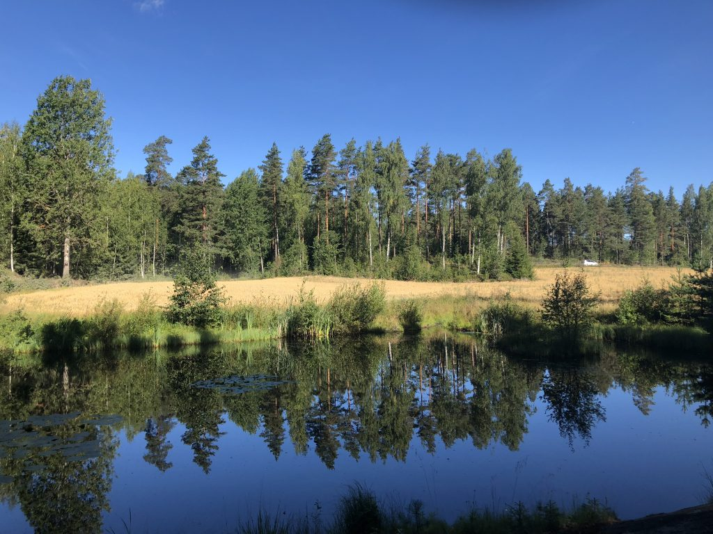 Finnish Lake and Forest